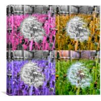 Ripe dandelion flower framed photo print, Canvas Print
