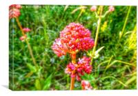 HDR pink perennial flower, Canvas Print