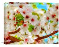 Macro HD flowering cherry blossom tree  , Canvas Print