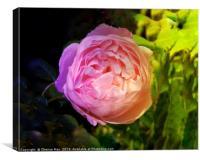 Pink rose flower , Canvas Print