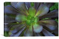 Flower Cactus, Canvas Print