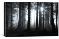 Mysterious forest, Canvas Print
