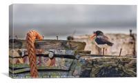 Oyster Catcher, Canvas Print