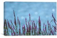 Purple Loosestrife, Canvas Print