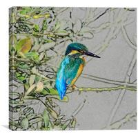 Kingfisher print, Canvas Print