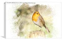 Robin portrait, Canvas Print