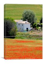 Poppies, Andalucia, Spain                         , Canvas Print