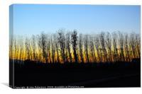 Winter trees sunset, Canvas Print