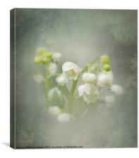 Lily-of-the-Valley, Canvas Print