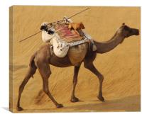 A Dog enjoying a Camel ride , Canvas Print