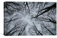 Root or Branch , Canvas Print