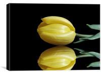 Mirrored Tulip, Canvas Print