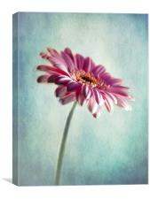 A Shade Of Pink, Canvas Print