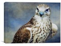 Saker Falcon, Canvas Print