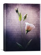 Petals and Poems, Canvas Print