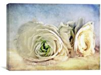 Resting Ranunculus, Canvas Print
