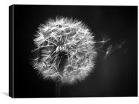 Dandelion Whispers, Canvas Print