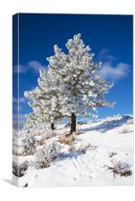 Frost Covered! , Canvas Print