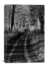 Forest Lane, Canvas Print