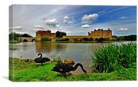 Black Swans at Leeds Castle II, Canvas Print