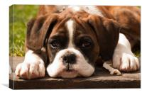 Dog Alfie I Boxer Puppy, Canvas Print
