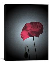 Dark Remembrance Poppy, Canvas Print