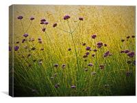 Verbena Flowers, Canvas Print