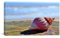 Seaside Sea shell, Canvas Print