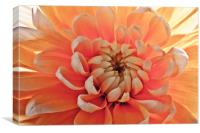 """Peachy Calendula"", Canvas Print"