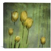 textured tulips (grunge yellow), Canvas Print