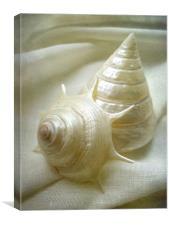 seashell study 2, Canvas Print