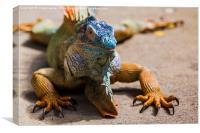 large green iguana, Canvas Print
