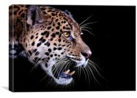 Jaguar snarling Paintover, Canvas Print