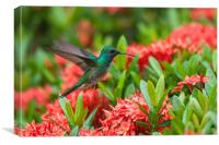 Hummingbird Flying, Canvas Print