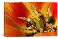 Tulip macro with orton effect, Canvas Print