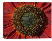 Single Sun flower, Canvas Print