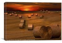 Harvest Sunset, Canvas Print