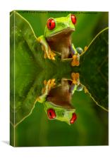 Red Eyed Tree Frog Reflections, Canvas Print