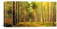 Forest Pathway, Canvas Print