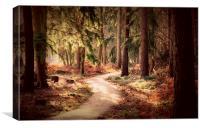Woodland Walk, Canvas Print