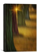 THE RAINBOW FOREST, Canvas Print