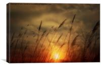Following The Sun, Canvas Print