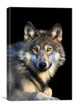 Jacob Wolf, Canvas Print
