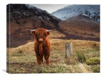 Baby Highland Cow, Canvas Print