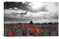 Spitfire Poppy Pass, Canvas Print