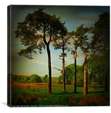 Tall Pines, Canvas Print