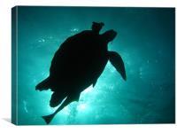 Turtle Silhouette, Canvas Print