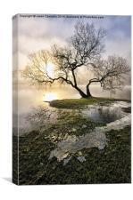 Ullswater Tree, Canvas Print