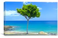 Lone Tree - Puerto Del Carmen, Canvas Print