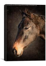 Portrait Of A Horse, Canvas Print